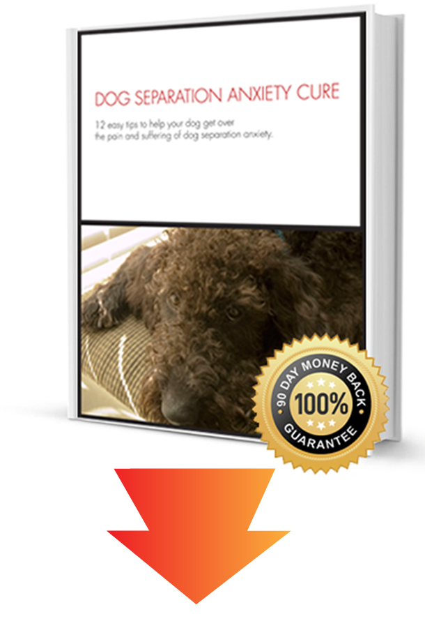 dog separation anxiety cure book