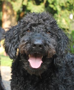 dog separation anxiety cure thundershirt