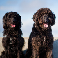 dog separation anxiety cure study