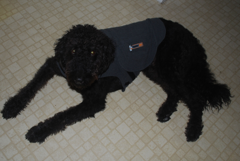 Dog Anxiety Thundershirt