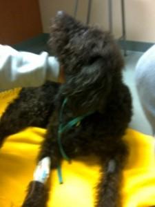 Anxious Dog at Vet Hospital