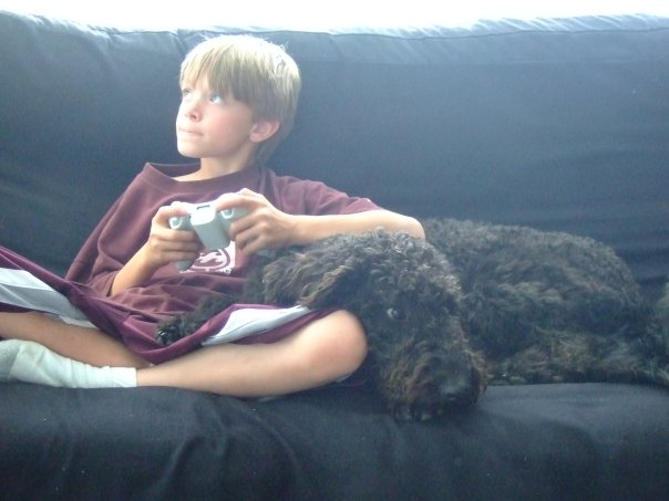 Dog separation anxiety can develop when kids go back to school.